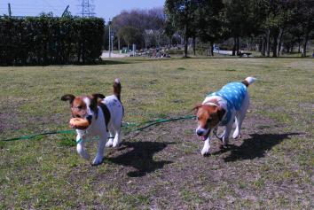 2010-2月大山公園 098_picnik