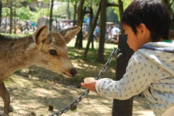 2010-5-1 奈良公園 060