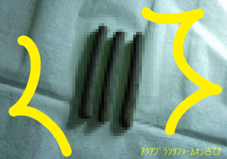 20111104-2