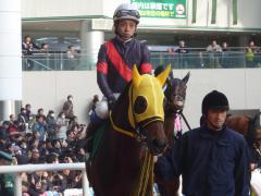 パドック:ラウンドワールドと岩田騎手