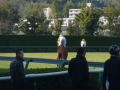 返し馬:ネヴァーフェイド