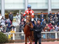 パドック:レッドクラウディアと内田騎手