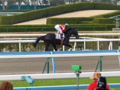 返し馬:レッドサクセサー