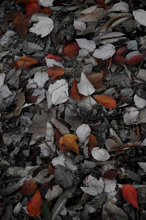 fallen_leaves_1.jpg