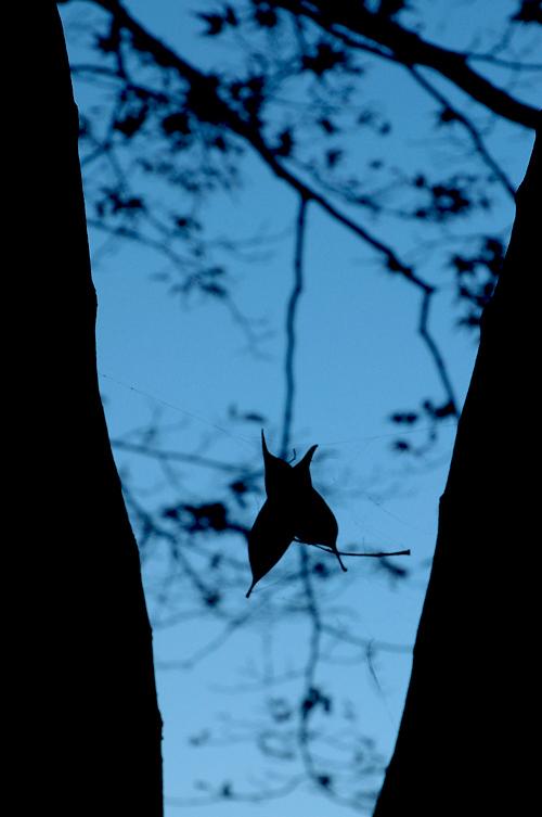fallen_leaves_11_10_19_2.jpg