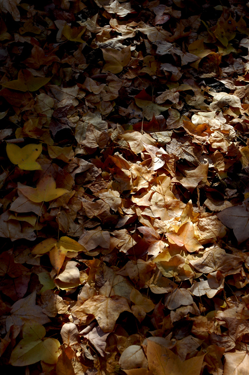 fallen_leaves_2.jpg