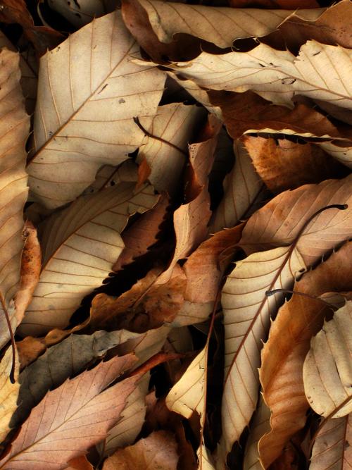 fallen_leaves_3.jpg