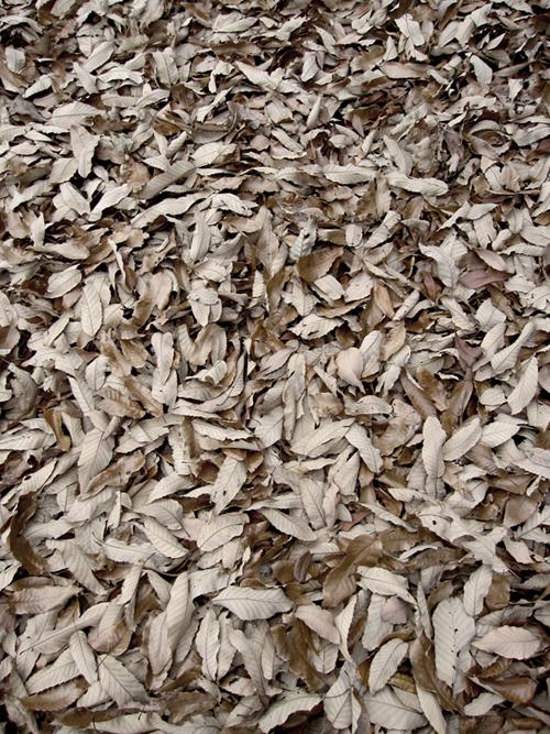fallen_leaves_4.jpg