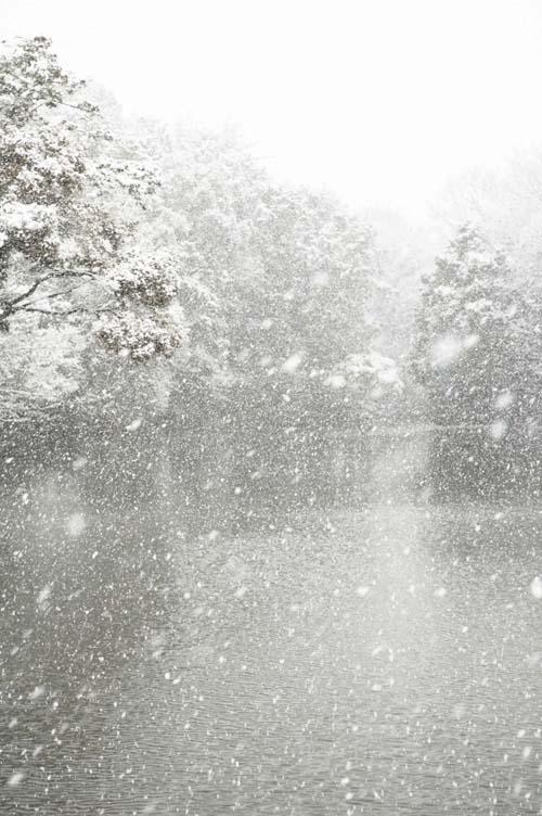 snow_miyaike_08.jpg