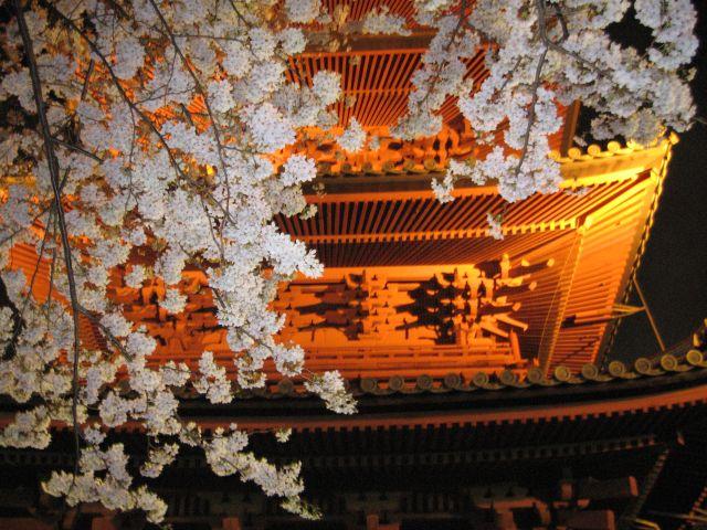 夜桜見物20100403