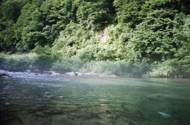 7月下旬の南魚沼1