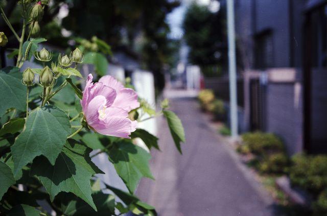 路地_池上-01_03