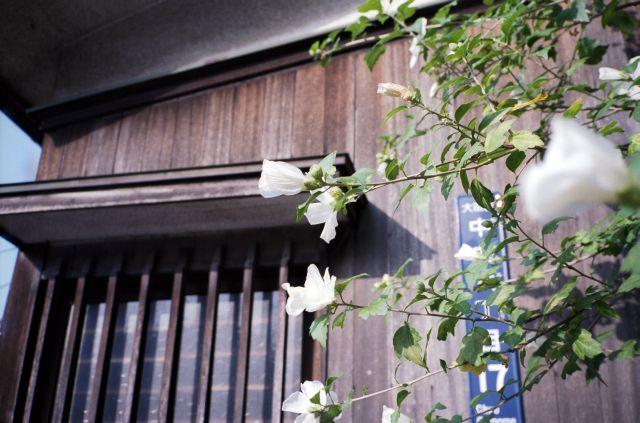 昭和の窓3