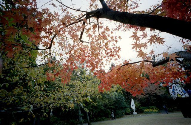 紅葉とふたり01b