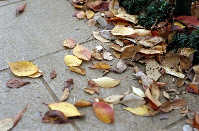 街の秋07b