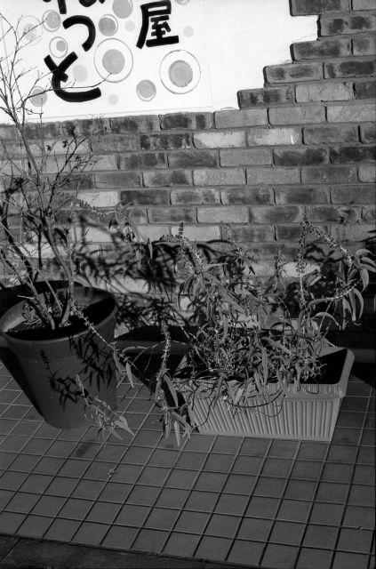 正月の街角01c