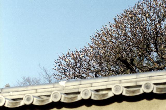 梅は咲いたか01a