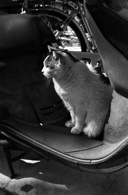 M3で猫01e