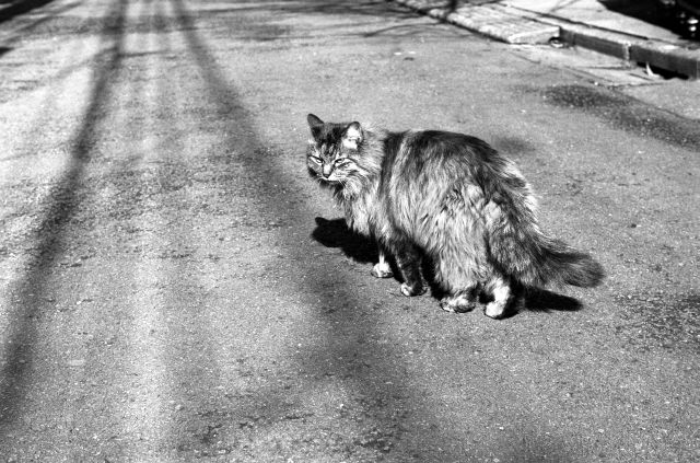 M3で猫01c