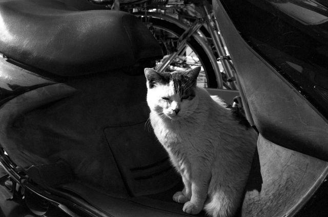 M3で猫01d