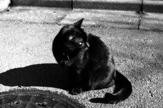 M3で猫01b