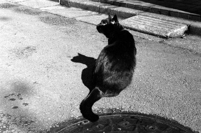 M3で猫01a