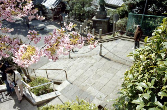 桜2011-01b
