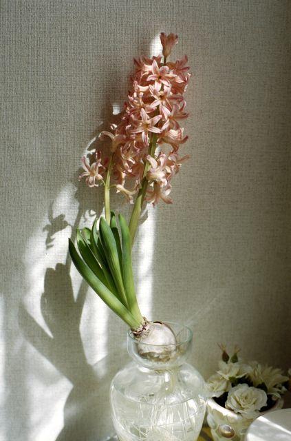 窓辺の花01a