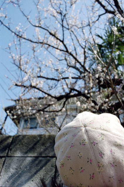 春を待つ01a