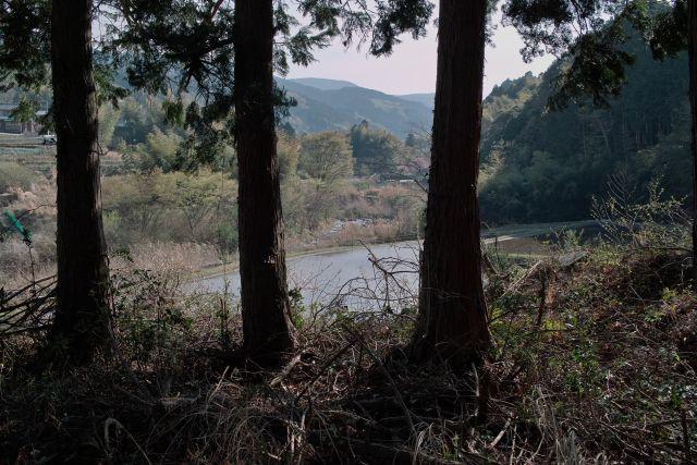 大見川20110416c