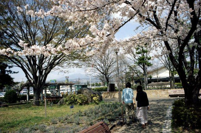 桜の木の下で01a