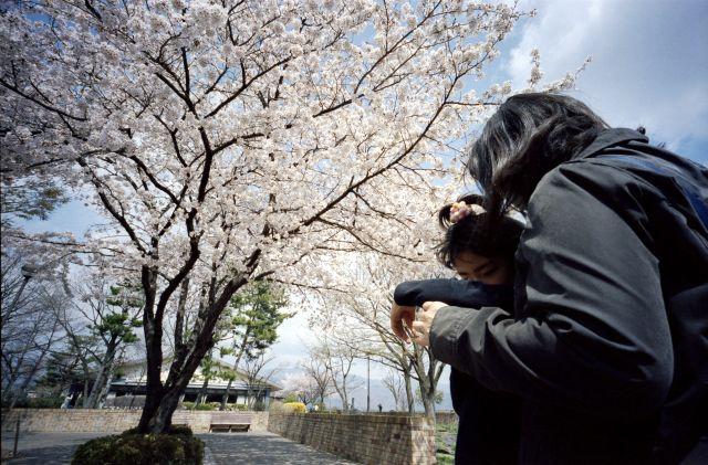 桜の木の下で02f