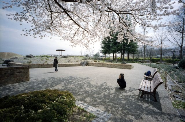 桜の木の下で02e