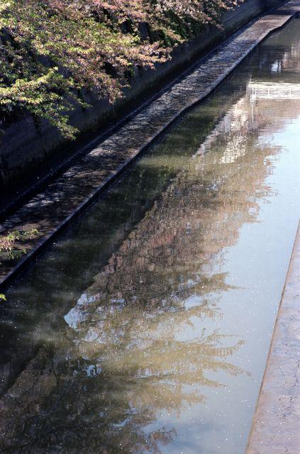 桜2011-08a