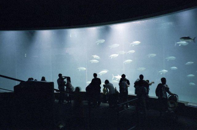 葛西臨海水族館01a