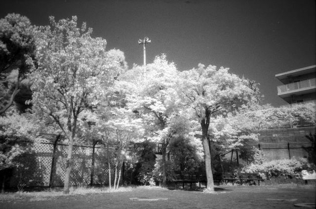 新緑の公園01b