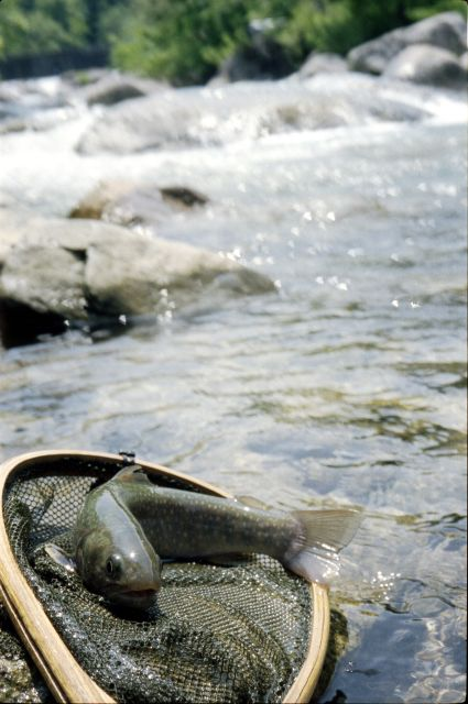 南魚沼2011-01i