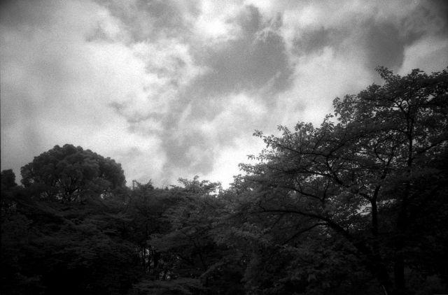 梅雨の晴れ間01d