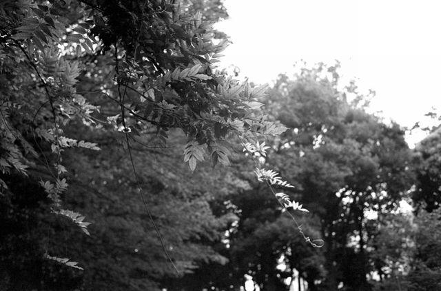 梅雨の公園01d