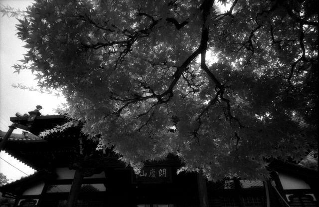 梅雨明け間近な風景01g