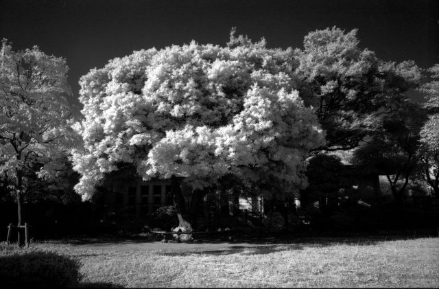 朝の公園02b