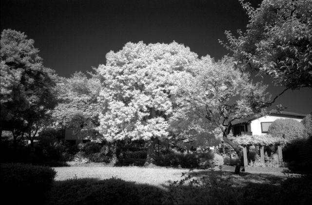 朝の公園02a