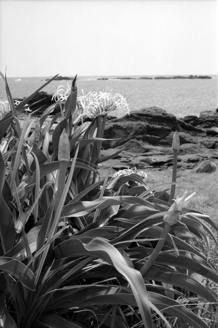 浜辺の観光02c