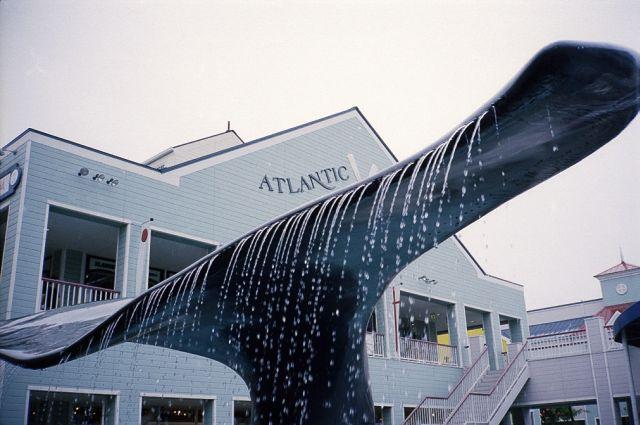 AtlanticTail