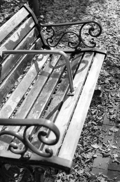 いちょう並木のベンチ01c