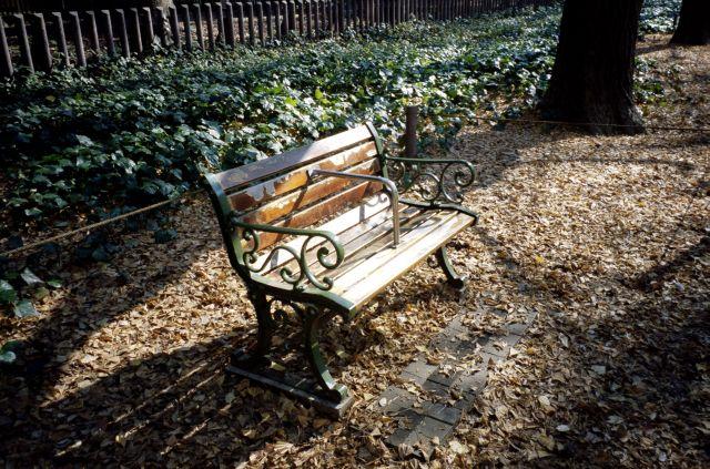いちょう並木のベンチ01d