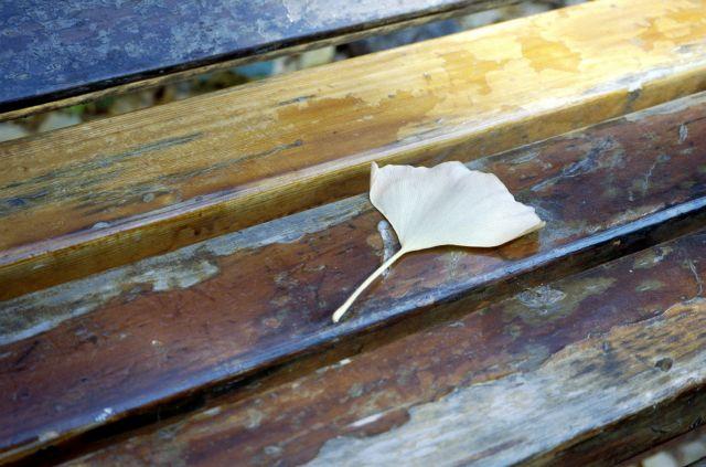 いちょう並木のベンチ01b