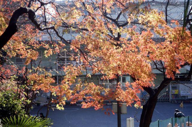 初冬に残る紅葉1b