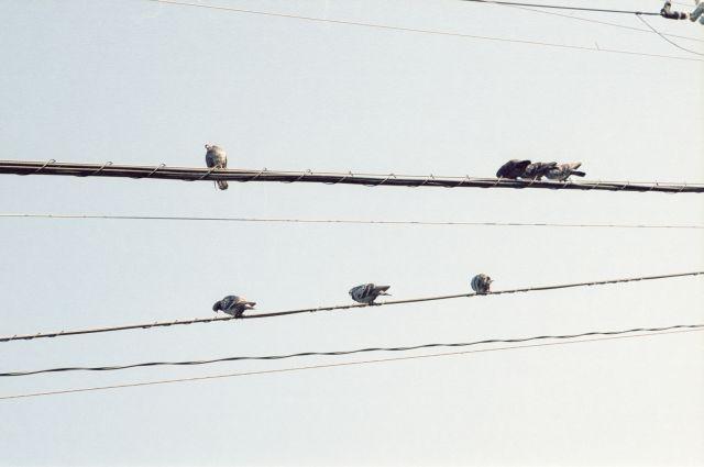 PigeonsOnSkyScore