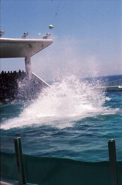 Splash_orca